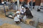 Pastores con animales